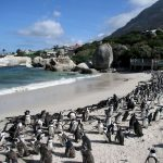 Viaggi on the road in Sud Africa: Boulders Beach