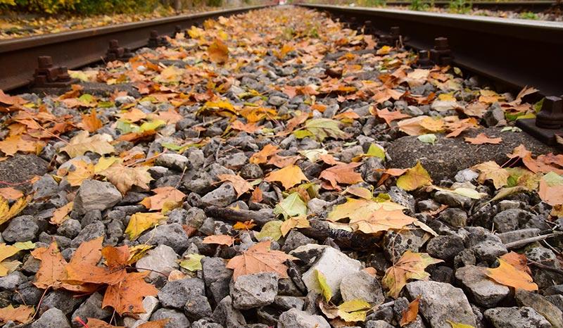 Sul treno del foliage
